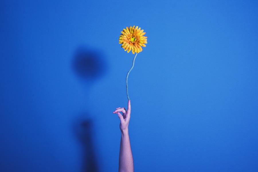 Día 278 - Flor